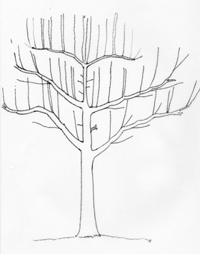 obstbaum streuobstwiese galaforst willkommen gartenpflege landschaftspflege forstpflege. Black Bedroom Furniture Sets. Home Design Ideas